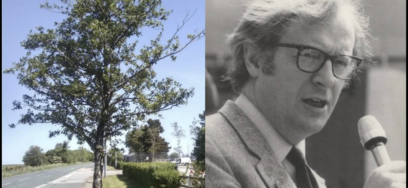 Bob Cryer's Memorial tree at risk of removal